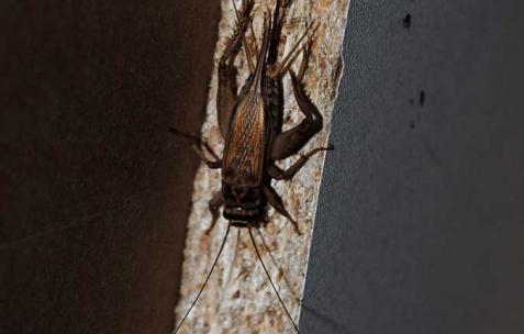 <p>Commune, <strong><em>J&rsquo;ai un pogona, donc je ne sais si les blattes lui iront aussi bien que les grillons</em></strong>, 2011, grillons. Vue de l'exposition <em>Commune</em>, Néon, Lyon, 2011. Photo : JAC / Néon, 2011.</p>