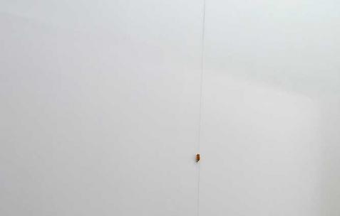 <p>Quentin Maussang, <strong><em>Sans titre</em></strong>, 2012, pâte à modeler, ficelle, acrylique sur toile. Vue de l'exposition <em>Ah, ah, ah, animal</em>, Néon, Lyon, 2012. Photo : Maxime Rizard / Néon.</p>