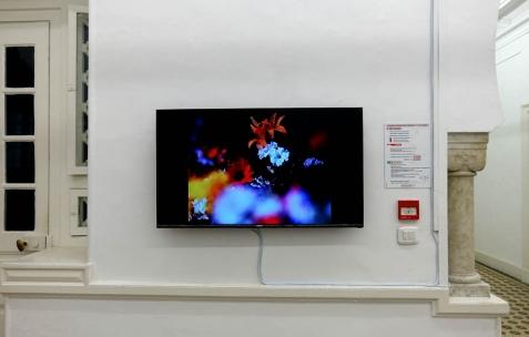 <p>Georges Rey, <strong><em>Fleurs</em></strong>, 1979, Film 16mm, couleur, silencieux, durée 12&prime;. Vue de l'exposition <em>Les Mondes Parallèles,</em> Galerie Nuage (Maison de France), Sfax, 2016. Photo: Georges Rey, 2016.</p>